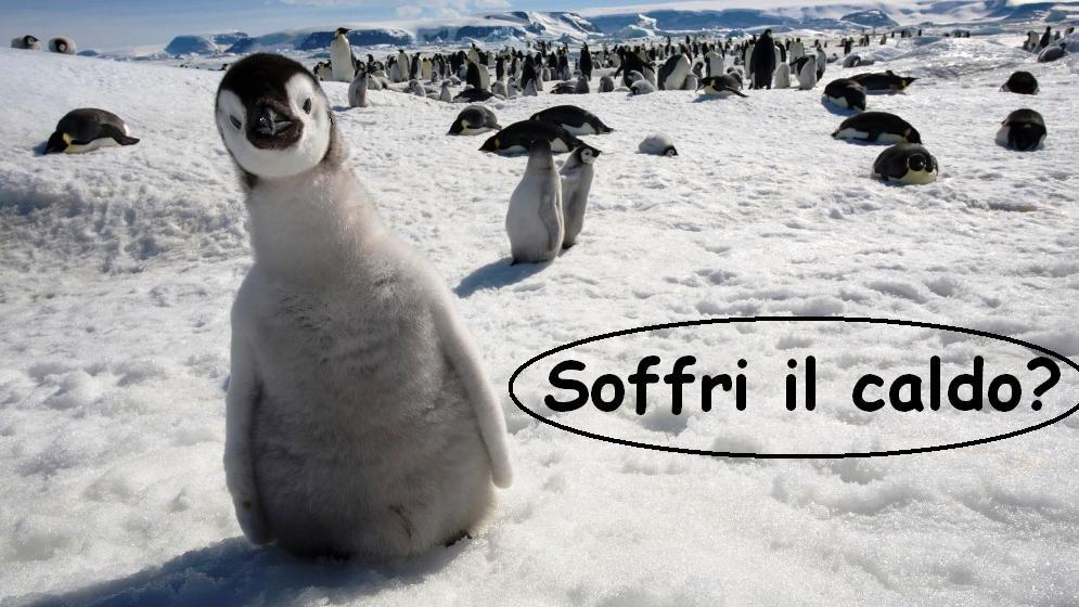 hd-wallpaper-Funny-Penguins